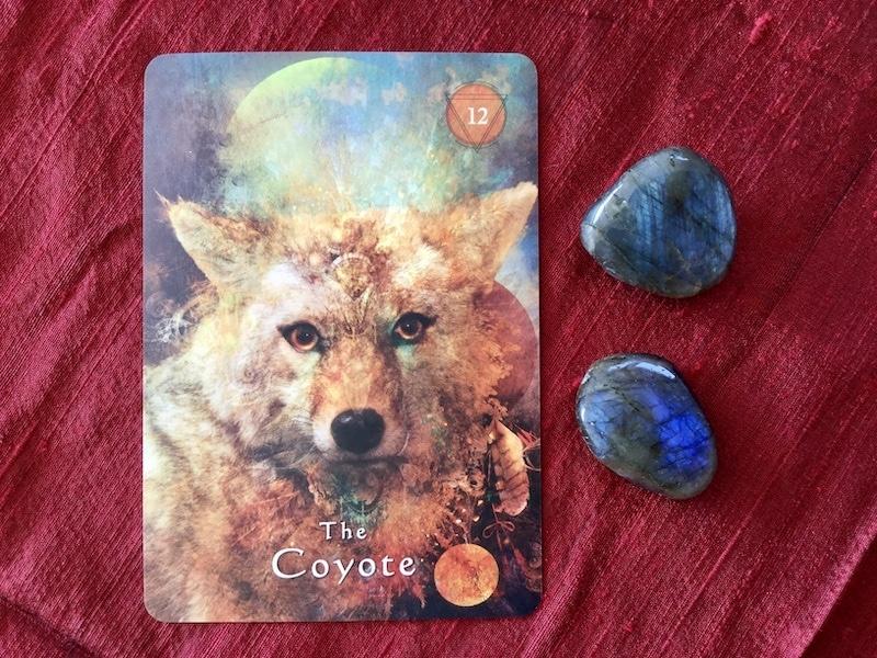 guidance de la pleine lune le coyote